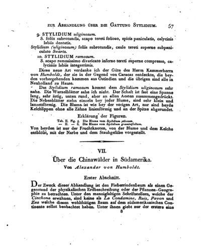 Humboldt, Alexander von: Über die Chinawälder in Südamerika. In: Magazin für die neusten Entdeckungen in der gesammten Naturkunde, 1. Jg. (1807), S. 57-68, 104-120.